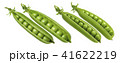 Green pea pod together set isolated on white 41622219