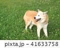 草原の上に佇む犬 41633758