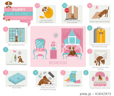 Puppy care and safety in your home. Bedroom.  41642973