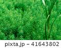 水草 41643802