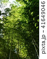 竹林 41649046