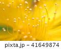 自然の美 花も道化のように 41649874
