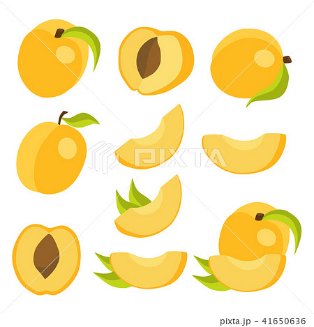 Vector collection of fresh apricots. 41650636
