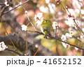 鳥 小鳥 野鳥の写真 41652152