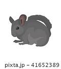 チンチラ げっ歯類 ネズミ目のイラスト 41652389