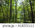 上高地 風景 自然の写真 41653111