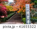 円覚寺 鎌倉 紅葉の写真 41655322