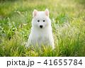 わんこ 犬 草の写真 41655784