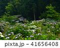 花の寺(勝名寺)あじさい (香川県高松市西植田町)4 41656408