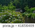 花の寺(勝名寺)あじさい (香川県高松市西植田町)5 41656409