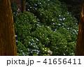 大窪寺前あじさい園(香川県さぬき市多和)1 41656411