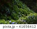 大窪寺前あじさい園(香川県さぬき市多和)2 41656412