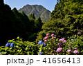 大窪寺前あじさい園と女体山(香川県さぬき市多和)3 41656413