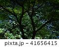 大窪寺前あじさい園(香川県さぬき市多和)4 41656415