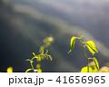 新緑 植物 エコの写真 41656965