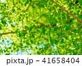 新緑イメージ 41658404