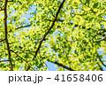 新緑イメージ 41658406