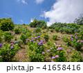 修善寺 虹の郷 花の写真 41658416