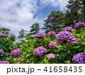 修善寺 虹の郷 植物の写真 41658435