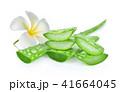 多肉植物 リュウゼツラン 竜舌蘭の写真 41664045