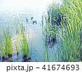 なぎさの池の鴨 S_001 41674693