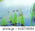 なぎさの池の鴨 S_002 41674694