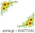 ひまわり フレーム 向日葵のイラスト 41677242