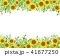 ひまわり フレーム 向日葵のイラスト 41677250