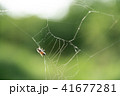 蜘蛛の巣 ミツバチ 蜂の写真 41677281