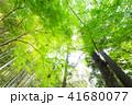 林 木 森の写真 41680077