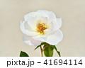 バラ 花 薔薇の写真 41694114