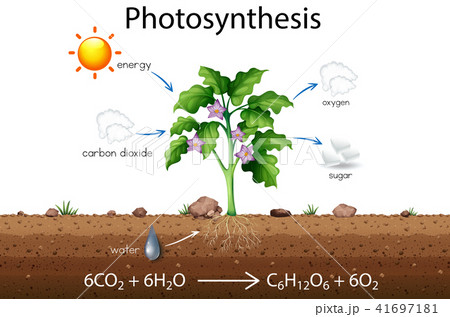 Photosynthesis explanation science diagram 41697181