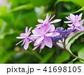 ピンクの花 41698105