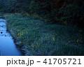 蛍 夜 光の写真 41705721