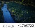蛍 夜 光の写真 41705722