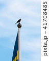 Blackbird on the top of a flag pole 41708485
