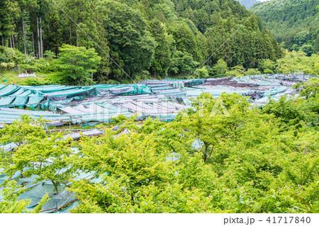 (静岡県)筏場のワサビ田 41717840