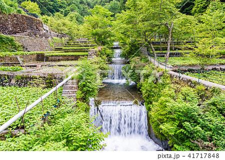 (静岡県)筏場のワサビ田 41717848