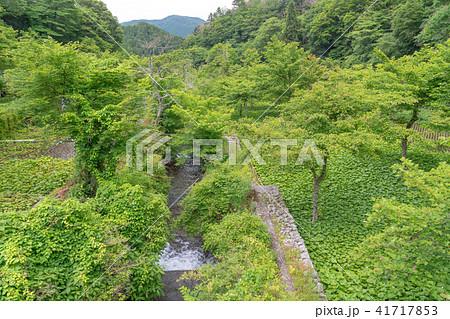 (静岡県)筏場のワサビ田 41717853