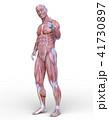 男性人体模型 41730897