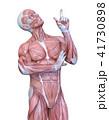 男性人体模型 41730898