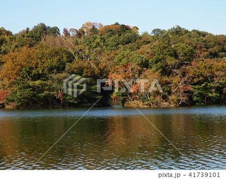 秋の色に染まり始めた湖畔 41739101