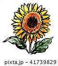 花 夏 ヒマワリのイラスト 41739829
