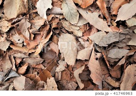 秋の落ち葉、美しいもみじと紅葉 41746963