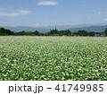 そば畑 41749985