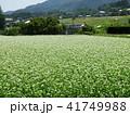 そば畑 41749988