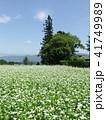 そば畑 41749989