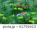 モネの池 41750423