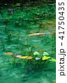 モネの池 41750435