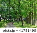 新緑 春 森林の写真 41751498